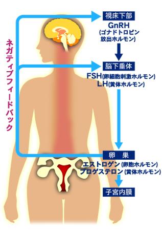 ニキビ治療薬 ホルモン治療薬