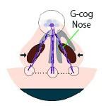 G-cog nose Gコグノーズ