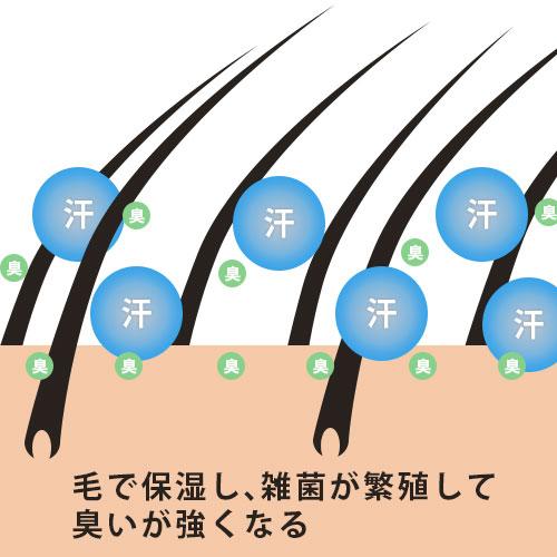 毛で保湿し、雑菌が繁殖して 臭いが強くなる